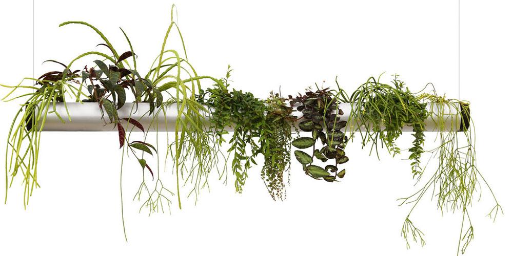 raumwunder | Pendularis - Blickfang mit Pflanzen | System mit Aufhängung