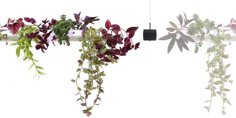 raumwunder | Pendularis - Blickfang mit Pflanzen | Hängepflanzen