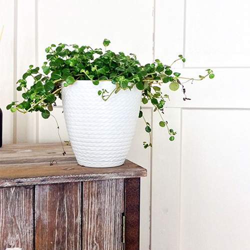 raumwunder   Meine erste eigene Wohnung   Pflanze