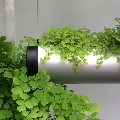 raumwunder | Entree Gestaltung | Pflanzen im Entree
