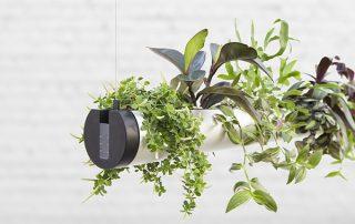 raumwunder   Pendularis - Blickfang mit Pflanzen   Pflanzenanordung