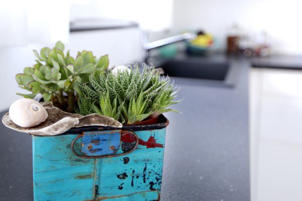 raumwunder | Küchenumbau | Pflanzendekoration